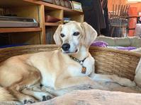 いろいろ考える - 犬と楽しむスローライフ