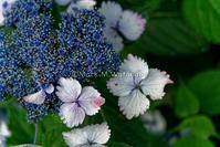 竹林に咲く紫陽花-2 - Mark.M.Watanabeの熊本撮影紀行