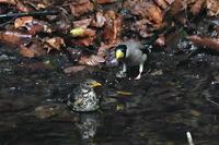 水場の鳥たち - そらと林と鳥