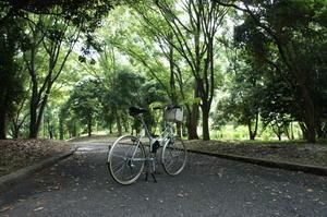腰が痛くても乗りたい自転車 -