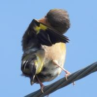 今日も一日ありがとう酒米の王者山田錦発祥の地で探鳥 - 虫のひとりごと
