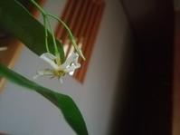 ある恋の花… - 侘助つれづれ