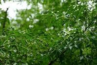 赤い花と白い花☆神代植物公園 - さんじゃらっと☆blog2