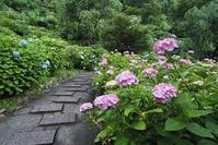 アジサイの咲くお寺善峯寺 - 峰さんの山あるき