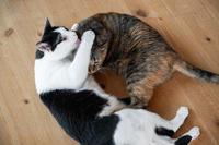 「私もー」のミッちゃん - 猫と夕焼け