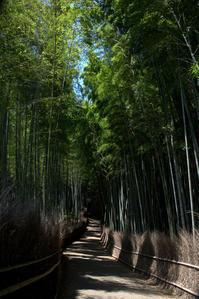 蒼い季節竹林の小径 - 京都ときどき沖縄ところにより気まぐれ