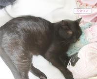 猫セラピー - ちいさなチカラ