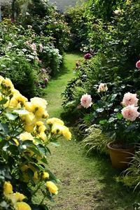 5月のバラを振り返って1. - バラとハーブのある暮らし Salon de Roses