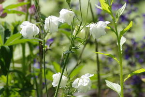 庭の花 - 今日の鳥さんⅡ
