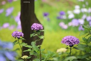 6月の色 -