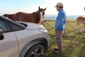 馬がつかず離れずなめた夫の車、恋か自己愛か食いしん坊か - イタリア写真草子