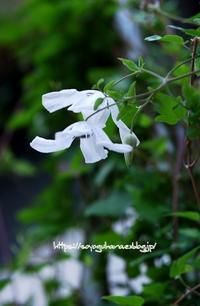 アルバラグジュリアンス - 花と風の薫り