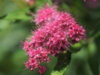 公園に咲く花奈良県 - ty4834 四季の写真Ⅱ