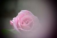 雨に濡れて - さぬき風花