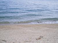 海は涙。。。 - umi no oto ♪