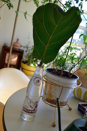 植物たち - ポップ456