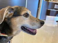 ココア心臓検査 - 犬と楽しむスローライフ