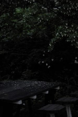 拝啓森の花園の守人様 四十五 - 向こうの谷に暮らしながら