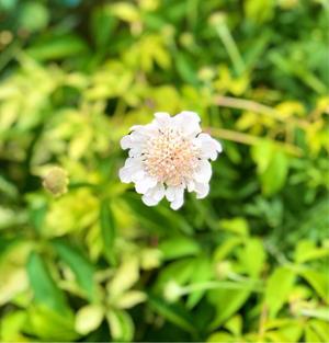 除草剤被害のバラ達のその後( ;  ; )と青空にオデッセイア? - 薪割りマコのバラの庭