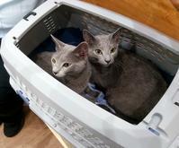 猫フィラリア予防 - なのはペットクリニック 2021年3月24日新規オープン!