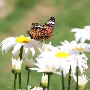 ◆蝶のダンス! - Soleilの庭あそび・・・布あそび♪