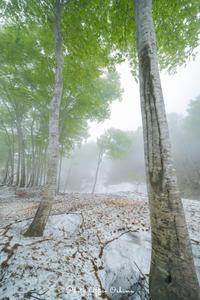 豪雪地帯のブナ林 - Digital Photo Diary