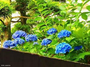 裏隣りの花 - HAIKU/ summer PHOTO