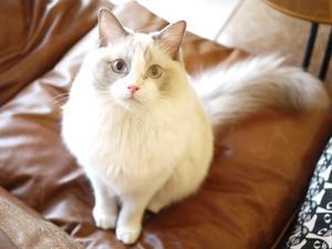 猫のお留守番 マロンちゃん編。 -