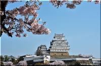 姫路城の桜 - 北海道photo一撮り旅