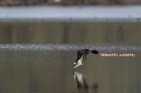 ラストチャンスの水鏡? - 野鳥のさえずり、山犬のぼやき
