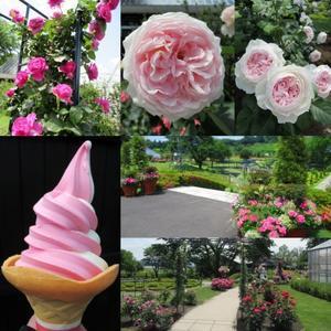 中之条ガーデンズ① * バラが花盛りの美しいガーデンへ♪ - ぴきょログ~軽井沢でぐーたら生活~