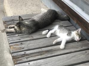 お疲れ気味 - トルコ子育て生活