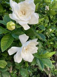 初夏の花 - おうちやさい