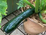菜園の野菜たちとリフォーム代金^^; - ひとり言