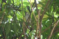 野鳥の鳴き声 - 写真の記憶