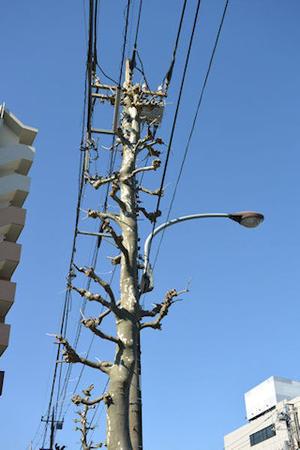 電柱に擬態した街路樹 - Fire and forget