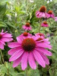 夏の花🎶 - himeのひとりごと