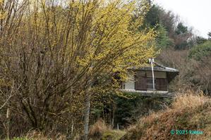 山茱萸咲く里 - katsuのヘタッピ風景