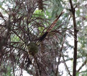 一期一会の野鳥たち