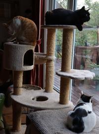 猫&動物など - 標高480mの窓からⅡ
