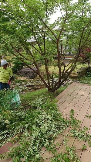 桜の枝を・・・ - 金沢犀川温泉 川端の湯宿「滝亭」BLOG
