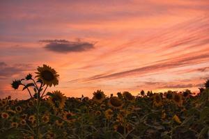 ひまわり畑と夕焼け空 - 写真ブログ「四季の詩」