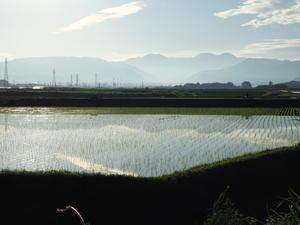 梅雨と思われない合間の晴天もう夏の空です。が近所では田植えが真っ盛りです。 -