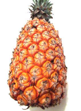 台湾産パイナップル - 軟弱キャンプのすすめ2