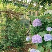 紫陽花の季節の鎌倉で - 小さなことからこつこつと