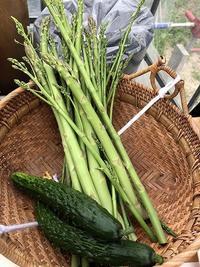野菜作り・・初収穫と今の畑 - あいやばばライフ