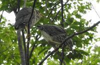 鳥観察、近況 - 山歩風景