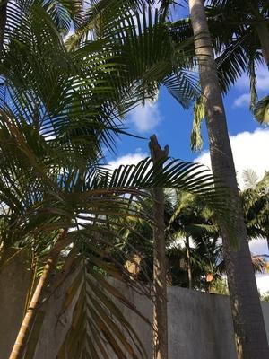 同世代の小池さん、頑張って!いや頑張りすぎないで! - ハチドリのブラジル・サンパウロ(時々日本)日記