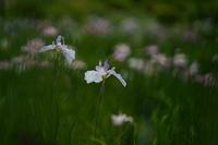 梅雨の花 - さすらい写人
