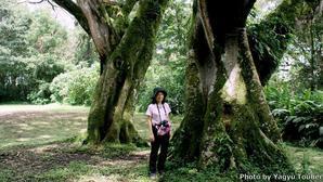 コスタリカ背景はサンホセ東公園の大木 - とことん写真
